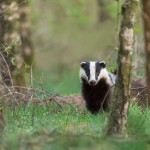 Nature_Talks-das-badger-petersmoments-fotoreis