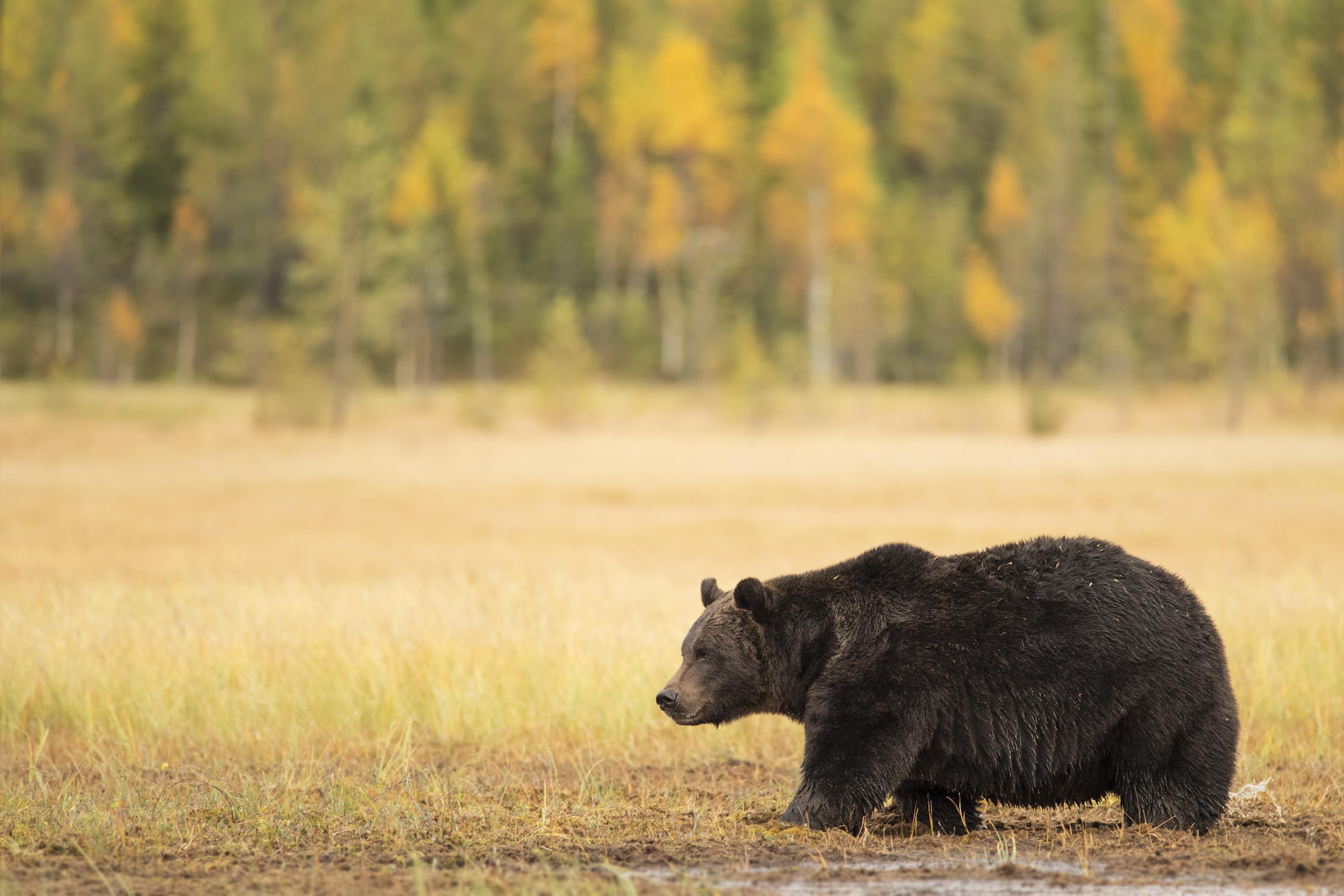 Nature_talks-fotoreis-finland-beer-brown_beer-petersmoments