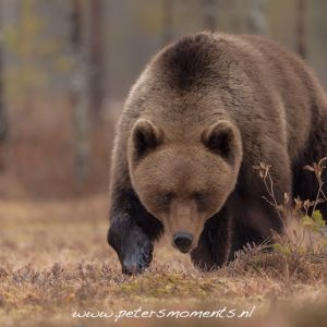 Nature_Talks-fotoreis-beer-brown_beer-finland-petersmoments
