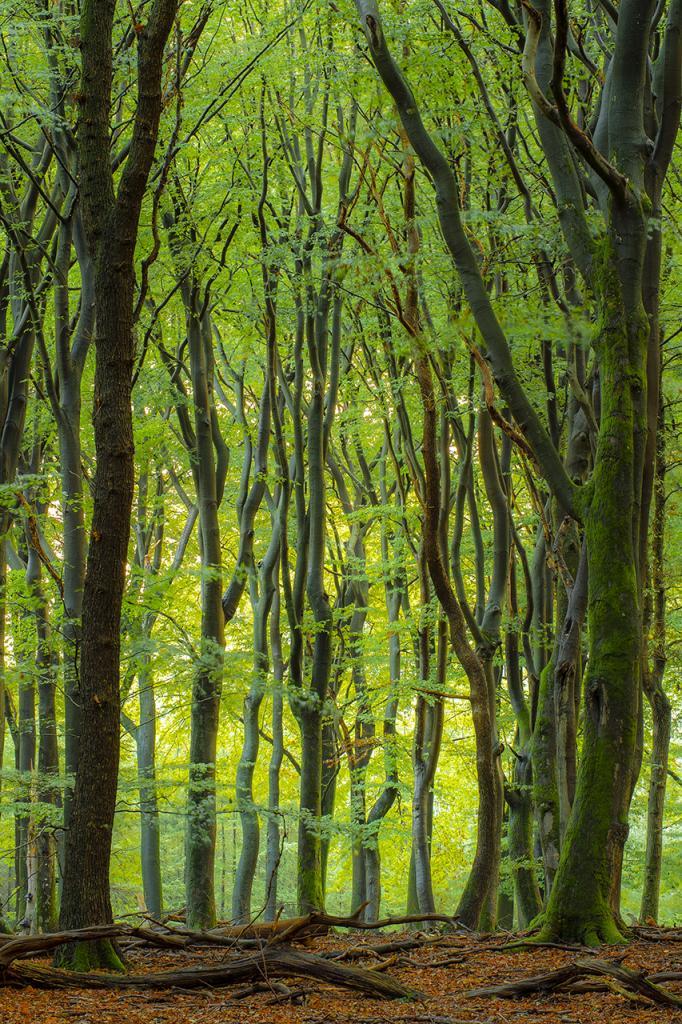 petersmoments-bomen-PVV1485