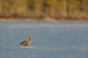 Peter_van_der_Veen-Petersmoments-Nature_talks_foto_festival-korhoen-vrouw on ice